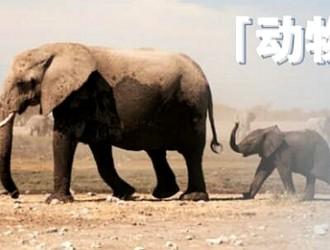 WWF如何利用微博掀起公益讨论热潮